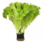salat-aficion